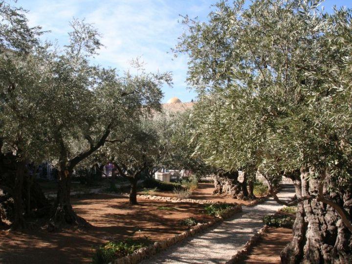 上图:客西马尼园。