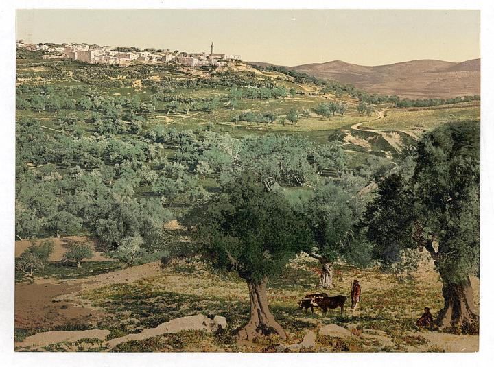 上图:1890年拍摄的撒玛利亚城。现藏于美国国会图书馆。