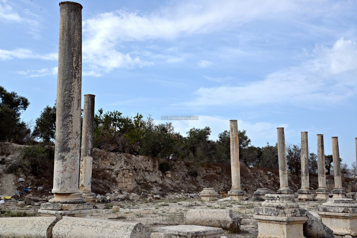 上图:罗马时代撒玛利亚柱廊街遗址,现存600根这样的石柱,联结撒玛利亚的西城门和东城门。
