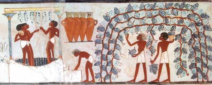 上图:古埃及壁画上的酒榨。酒榨通常是用大石凿成的石槽(赛五2),底端有一个洞,通往下层石槽。工人将收割来的新鲜葡萄倒入上层石槽中,用脚踩踏,葡萄汁经小洞流入下层石槽。圣经常有踹酒过程比喻神忿怒的施行(赛六十三2-3;哀一15;珥三13;启十四19-20;十九15)。