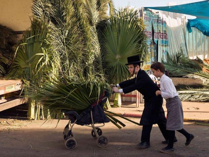 上图:正统犹太人正在搬运棕树枝回家,做住棚节棚子(Sukkah)屋顶。