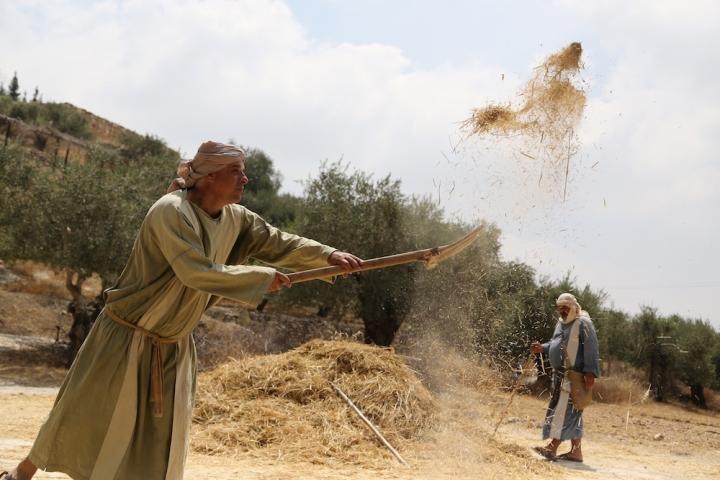 上图:以色列拿撒勒村演示古代以色列人扬场。农民打谷场上脱粒以后,用木叉把麦粒和脱离的糠秕一起扬在空中,风把比较轻的糠秕吹到远处,而比较重的麦粒则落在近处,这样可以把麦粒和糠秕分开。