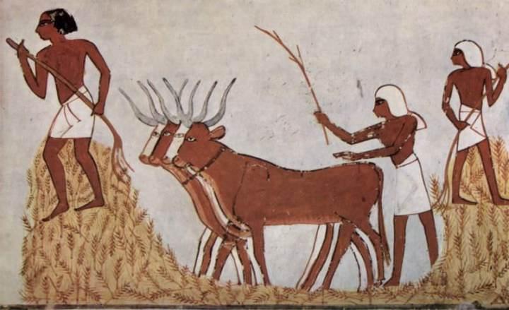上图:主前1422-1411年的古埃及壁画,埃及人在打谷。