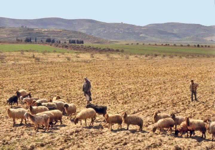 上图:多坍谷的牧羊人。摄于1979年。