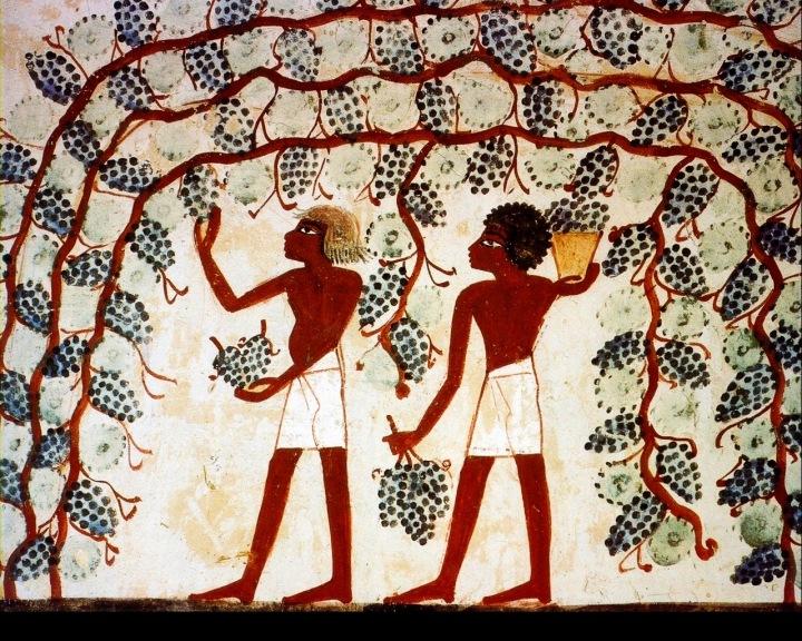 上图:古埃及第十八王朝时期(主前1459-1292年)墓葬壁画(The Theban Tomb TT52)中采收葡萄的场景。许多壁画显示,中王国和新王国时期的古埃及有高度发达的葡萄种植、葡萄园管理以及酿酒技术。