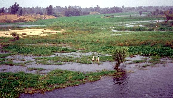 上图:尼罗河上游的埃塞俄比亚高原的季节性暴雨带来下游每年6-10月定期泛滥,洪水溢出河床,淹没两岸农田,洪水退后会留下一层厚厚的河泥,形成肥沃的土壤。