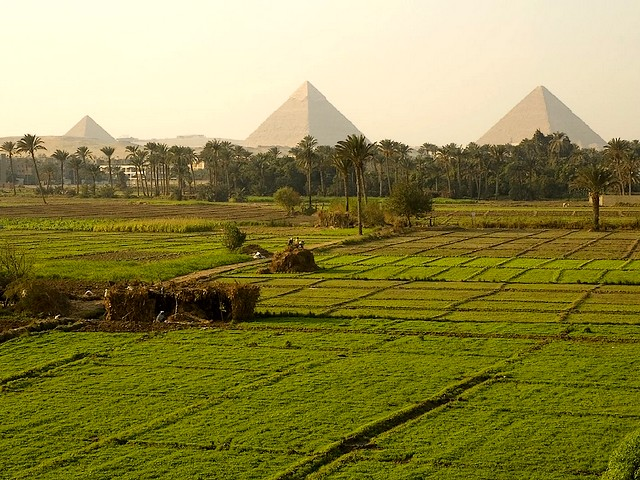 上图:埃及吉萨金字塔群附近的肥沃土地。