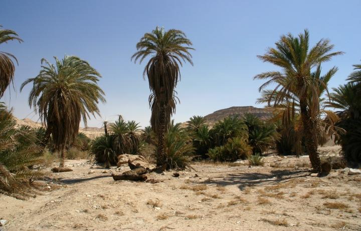 上图:西奈半岛的绿洲加兰德尔旱溪(Wadi Gharandel),一般认为这里就是「以琳」,而玛拉是北面11公里的哈瓦拉泉('Ain Hawarah),那里还有一些泉水是苦的。现在这里有水井,但已经没有12股泉水。也有人认为以琳就是现代的摩西泉 (Ayun Musa) ,那里还有12股泉水。