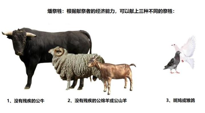 上图:燔祭的祭牲。根据献祭者的经济能力,可以献上3种祭牲,但都必须是公的。只有鸟没有要求。