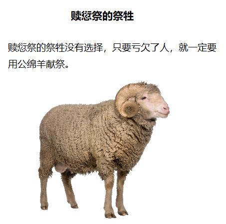 上图:赎愆祭的祭牲。只要是亏欠了人,不管多小的亏欠,除了赔偿另外五分之一,还必须献上一只公绵羊,没有其他选择。