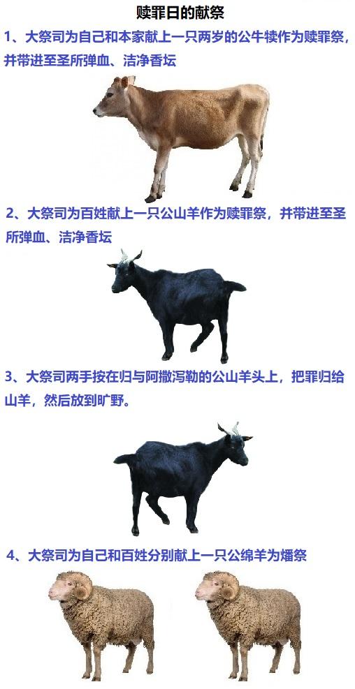 上图:赎罪日的献祭。用作赎罪祭的公牛犊和公山羊的血都要被带进至圣所弹血,并洁净香坛。赎罪祭的祭牲要完全烧掉。