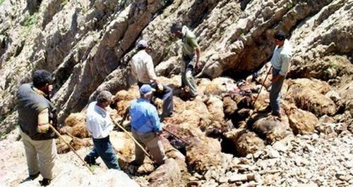 上图:2005年,土耳其有1500只绵羊跳下15米的山崖,其中450只摔死,后面的羊落在死羊堆上才没有死。绵羊不会单独行动,总是喜欢跟随头羊,结果头羊跌落山崖,后面的羊也跟着头羊跳崖。所谓的「羊群效应」,就是说人和羊一样喜欢随大溜,以为人多的就是对的,不料「有一条路,人以为正,至终成为死亡之路」(箴言十四12)。