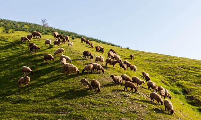 上图:以色列一个山头上的草场,就像一张绿色的桌子,正如诗二十三5所说「祢为我摆设桌子」。