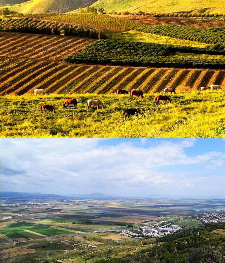 上图:巴珊地和耶斯列平原,分别是适合畜牧和耕种的地方,是名副其实的「流奶与蜜之地」(申二十六9)。