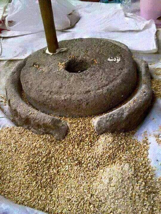 上图:古代以色列家用的磨石包括两块上下两块石头,通常用玄武岩制造。下磨石很重,谷粒放在上面平或微弯之处,以较轻的上磨石磨成面粉。一般人必须每天自己磨麦,如果拿磨石作为抵押品,他就不能做饭了。