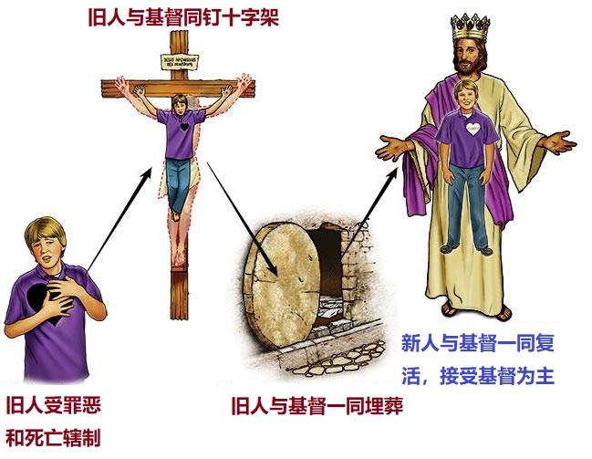 上图:我们的旧人和基督同钉十字架,使罪身灭绝,叫我们不再作罪的奴仆。新人与基督一同复活,接受基督为主。从此活着的不再是我,乃是基督在我里面活着。