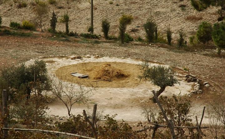 上图:拿撒勒村的打谷场。基甸本来应该在这样开阔的地方打麦子。