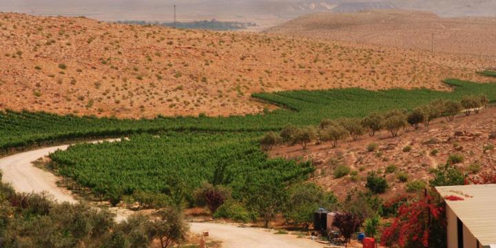 上图:位于以色列南地旷野(Negev Desert)的Carmey Avdat葡萄园。这里的气候很适合种植葡萄,只要有水源,就可以耕种。