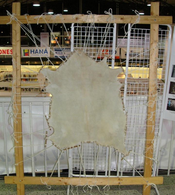 上图:在木框绷紧的一张山羊皮,干燥后可切割成为羊皮纸(Parchment)。羊皮纸是古代用来书写的一种材料,由去毛的羊皮或小牛皮经石灰处理,再用浮石软化、干燥后制成。这些羊皮纸订成小册子,称为手抄本。最好的羊皮纸称做犊皮纸(vellum),被用来抄写最重要的书籍。据说,主前2世纪埃及王托勒密五世(Ptolemy V)为了遏制别迦摩(Pergamon)图书馆与亚历山大图书馆的竞争,禁止出口蒲草纸(Papyrus),别迦摩人就发明了羊皮纸作替代物,结果在地中海地区逐渐取代了蒲草纸。因为羊皮纸两面都能书写、色彩饱满,可以折成书本;而蒲草纸只能一面书写,容易受潮,不适合在潮湿地区使用。羊皮纸的英文名称Parchment就是由别迦摩的名字而来。