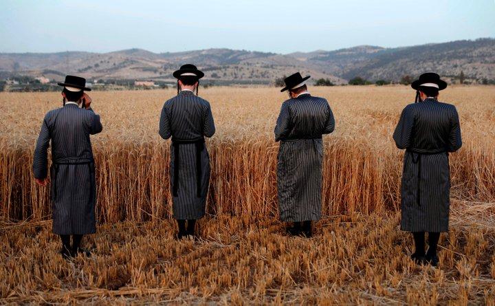 上图:以色列正统犹太人在西岸定居点的麦田里祷告。