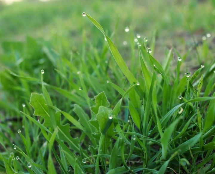 上图:以色列早晨的甘露,是植物在旱季的主要水分来源,虽然很不起眼,但对生命的作用却非常关键。