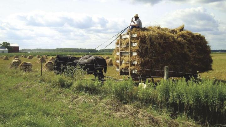 上图:阿米什人(Amish)用马车拉着「装满禾捆的车」(摩二13),非常沉重。