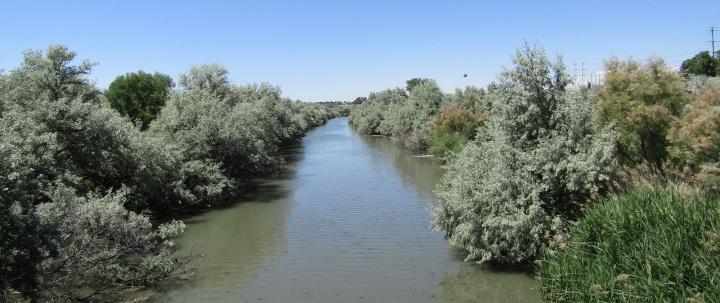 上图:约旦河两岸的丛林。约旦河蜿蜒曲折,每年春天黑门山的雪溶化时,河水便会泛滥,因此两岸遍布柽柳和各种灌木交织的丛林。